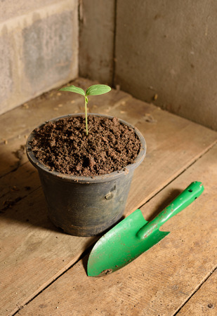 Small tree in a pot plant nursery.