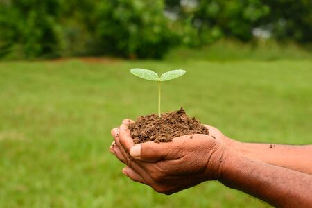 Hands holding small tree. Standard-Bild