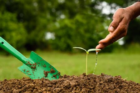 Hand watering a young plant Stock Photo
