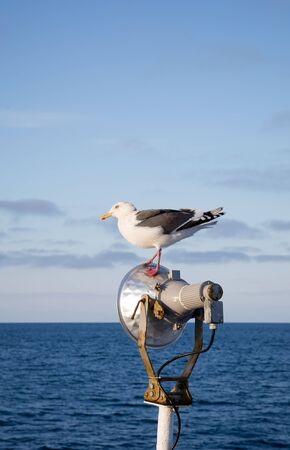 Seagull standing at the light pole on ship in the sea photo