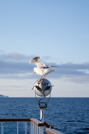 Nice seagull on ships light pole photo