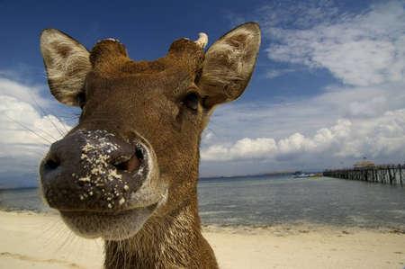 Deer At The Beach Stock Photo