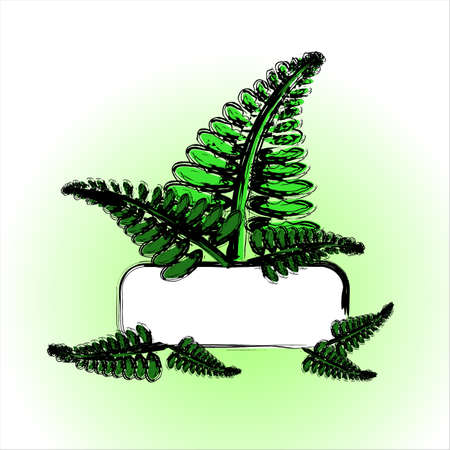 Green fresh fern background with blank space for your text, label Illustration