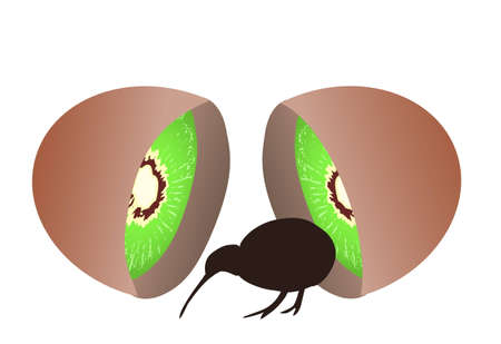 Small black kiwi bird coming from kiwi fruit, flightless bird, symbol of New Zealand Illustration
