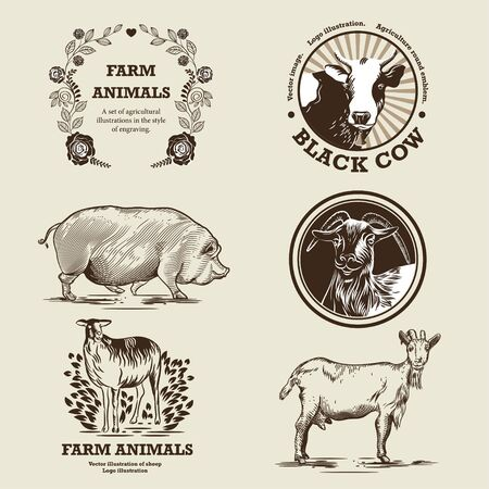 Goat, sheep, pig and cow illustration in the style of engraving.
