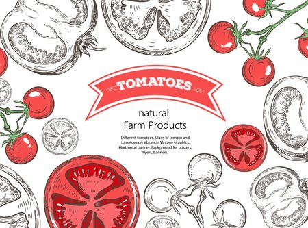 Different tomatoes. Slices of tomato and tomatoes on a branch. Vintage graphics. Horizontal banner.