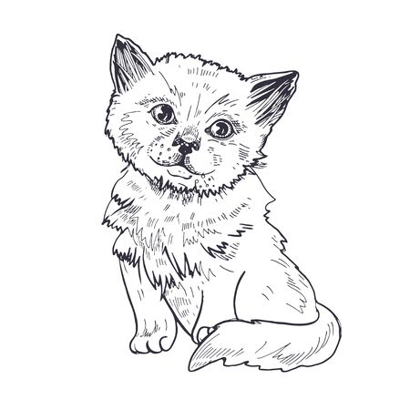 Portrait of a kitten. Black and white graphics. Sketch drawing.