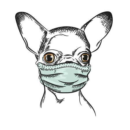 Vector image of a Chihuahua dog Dog in a medical mask. Pandemic. COVID-19.Portrait of a dog. Black and white graphics. Sketch