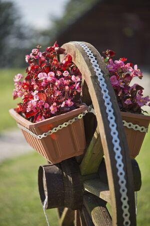 flowerpots: Flowerpots on the cartwheel