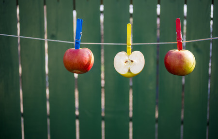 clench: Apples hanging on the rope to dry
