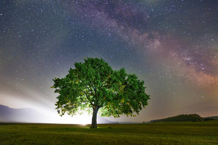 lonely tree on field under milky way galaxy Dobrogea Romania
