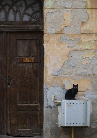 brasov: Black cat siting near an old door in Brasov Stock Photo