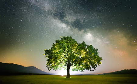 árbol solitario en campo bajo Vía Láctea, Dobrogea, Rumania