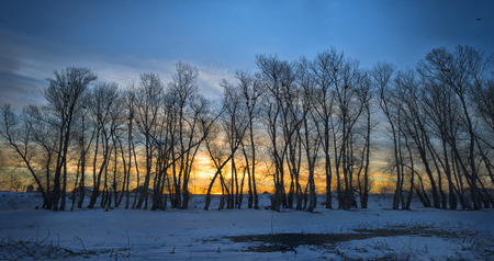 Trees covered with frost and crows over them. Winter sunset Stock Photo