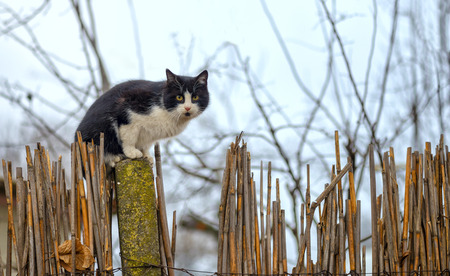 sneak: Cat on a fence. Neighbors cat is staring at photographer. Stock Photo