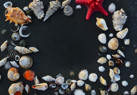 star fish: Sea shells and star fish on the sea pebbles