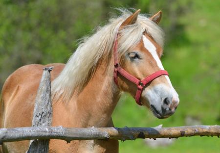 Wonderful close-up photo of horse Stock Photo