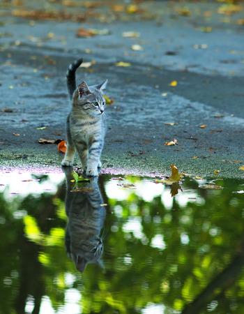 Katze am Rand des regen Pfütze sitzen. Reflexion im Wasser