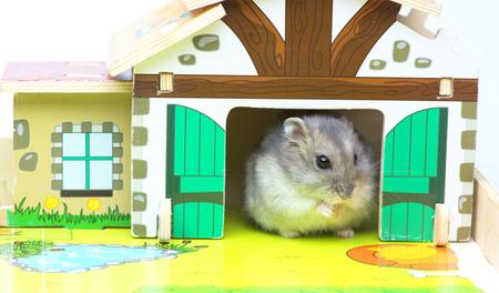 mini farm: Hamster in the toy house. MIni farm