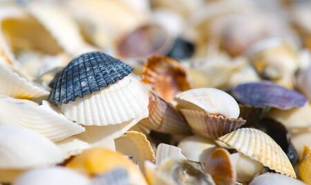 Shells of many types and sizes are found on our shelling beaches Stock Photo