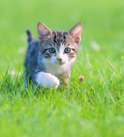 Little striped kitten hiding in the grass Фото со стока - 94117809