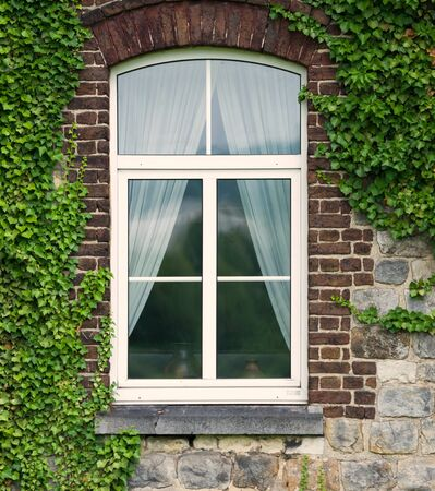 White window covered with green ivy. Standard-Bild