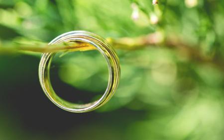 Wedding gold rings, on beautiful green plant Standard-Bild - 110837645