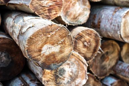 Woodpile closeup Standard-Bild - 110837946