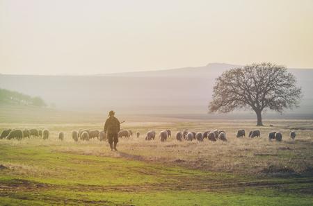 Berger et troupeau de moutons
