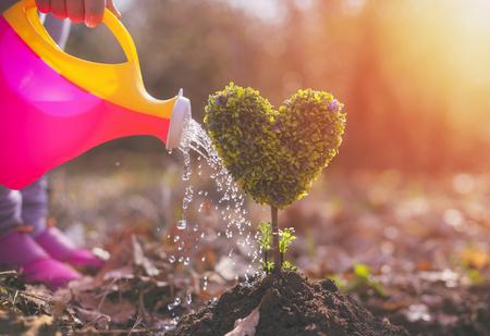 niña plantando un árbol en forma de corazón Foto de archivo