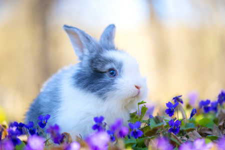 Little rabbit on green grass in spring day Stock Photo