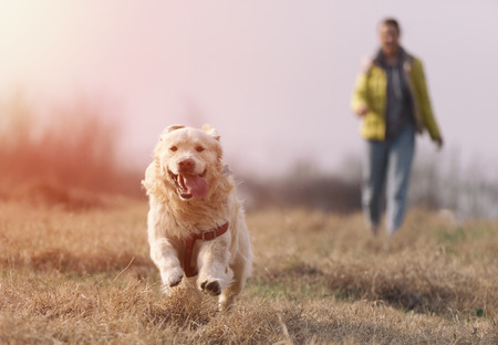 Golden retriever playing with his master in the field