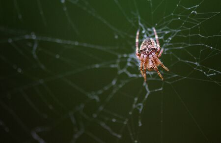 spider climbs on the web.