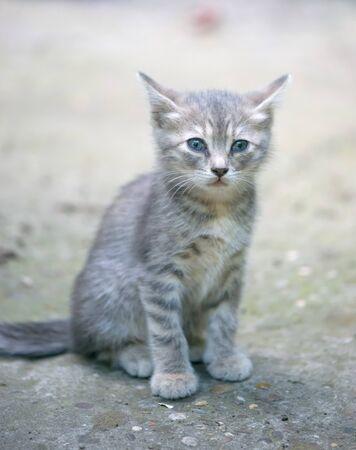 Sad little cat on street