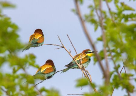 Beautiful nature scene with Common kingfisher (Alcedo atthis).