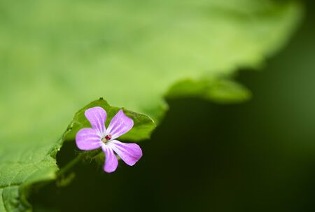 Purple flower over green background in mountains