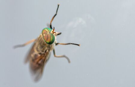 close up of a fly. focus on the eyes