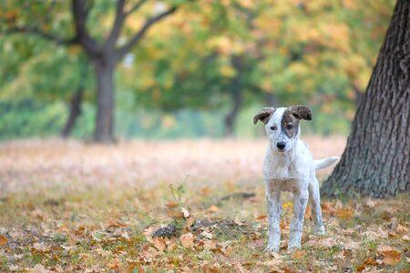 Street dog looking at the camera