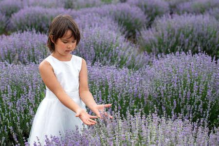 Adorable little girl in a lavender field 版權商用圖片