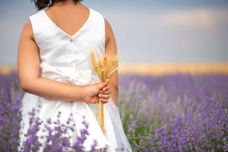 Back view of a little girl in lavender field holdig and holding bunch of wheat