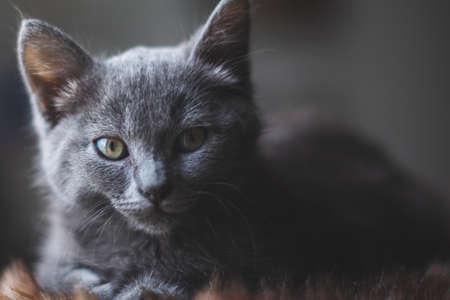 Young cute cat resting next to window. 版權商用圖片 - 155192317