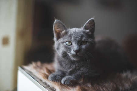 Young cute cat resting next to window.