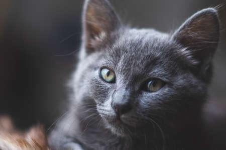 Young cute cat resting next to window. 版權商用圖片 - 155402461