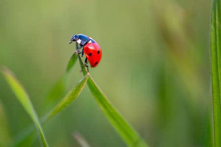 red ladybug on a leaf