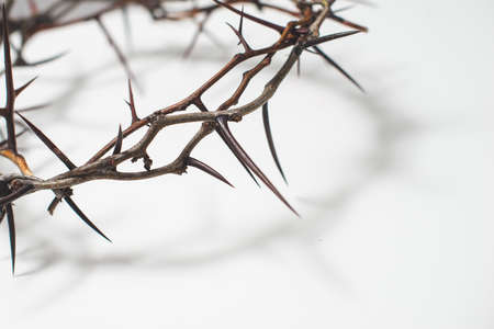 Crown of thorns Jesus Christ isolaten on white Standard-Bild