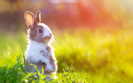Cute little bunny in grass with ears up looking away Standard-Bild