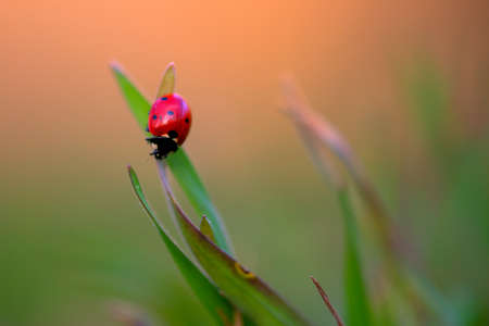 Ladybug is sitting on the grass