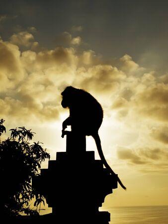 silueta mono: Mono silueta al atardecer, Pura Luhur Templo, Uluwatu, Bali, Indonesia
