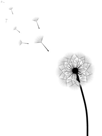 Vector illustration of dandelion with flying seeds isolated on white background