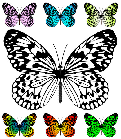 Modèle de vecteur de papillon avec des exemples. Couleur des ailes modifiable facile. Papillon de kite de papier et de papier de riz, Idea Leuconoe espèces. Vecteurs